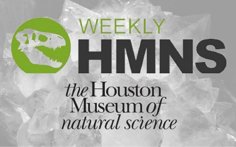 Newest Member of the Houston Museum of Natural Science……